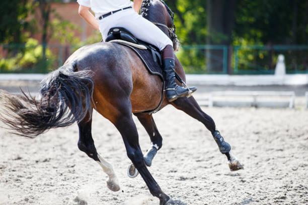 ショーの跳躍の競争のライダーと馬。 - 乗馬 ストックフォトと画像