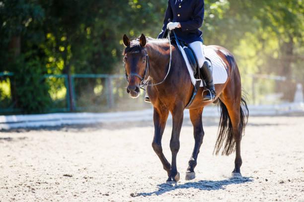 Bucht Pferd mit Reiter zu Fuß auf Dressur-Wettbewerb – Foto