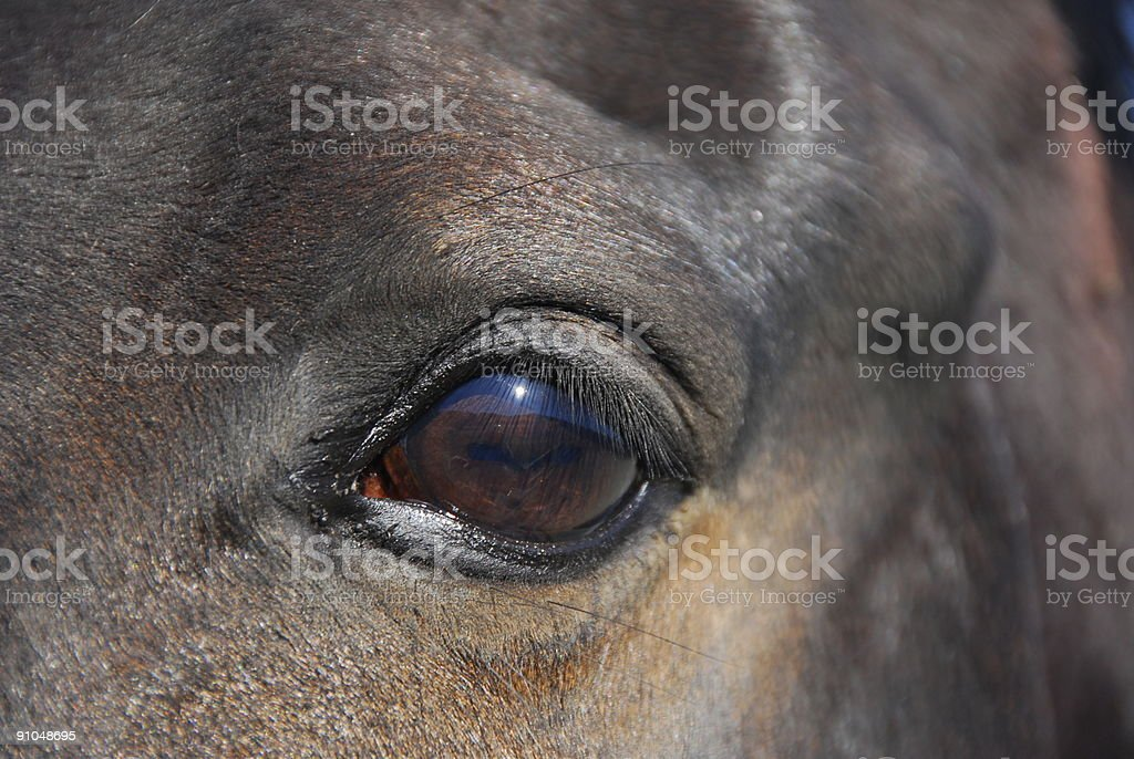 Bay horse's window to the soul stock photo