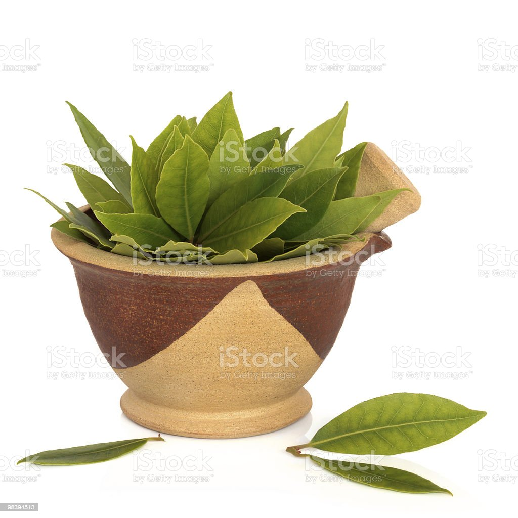 Bay Leaf Herb royalty-free stock photo