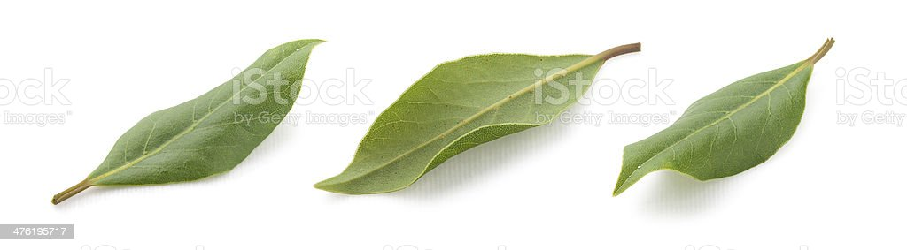 Bay leaf royalty-free stock photo