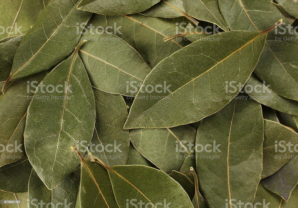 Bay leaf spice royalty-free stock photo