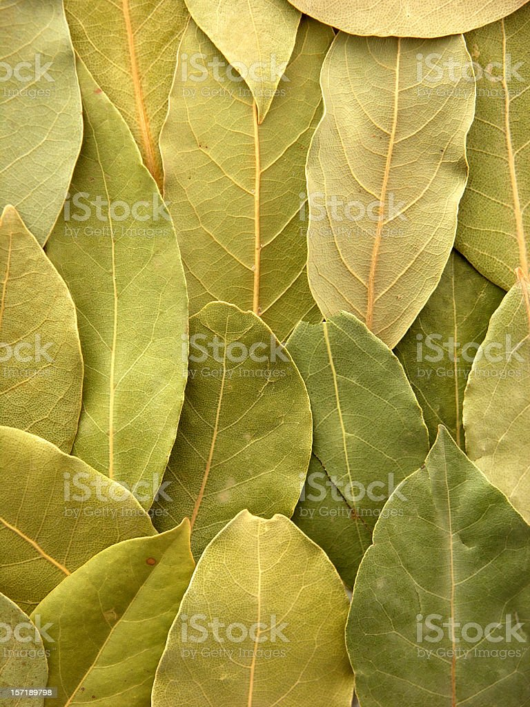 Bay leaves background royalty-free stock photo