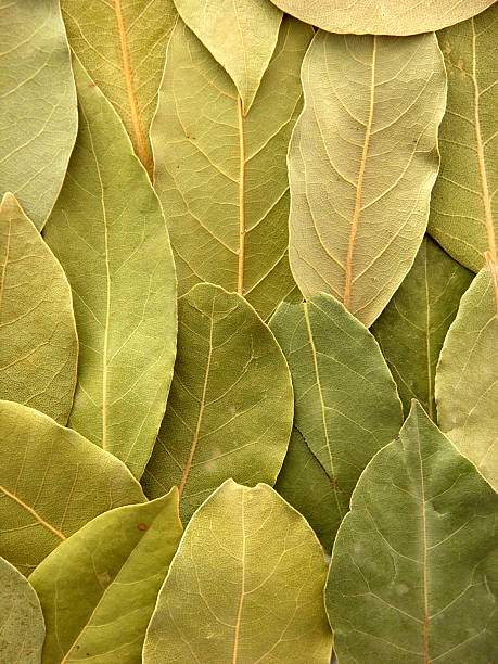 Bay leaves background stock photo