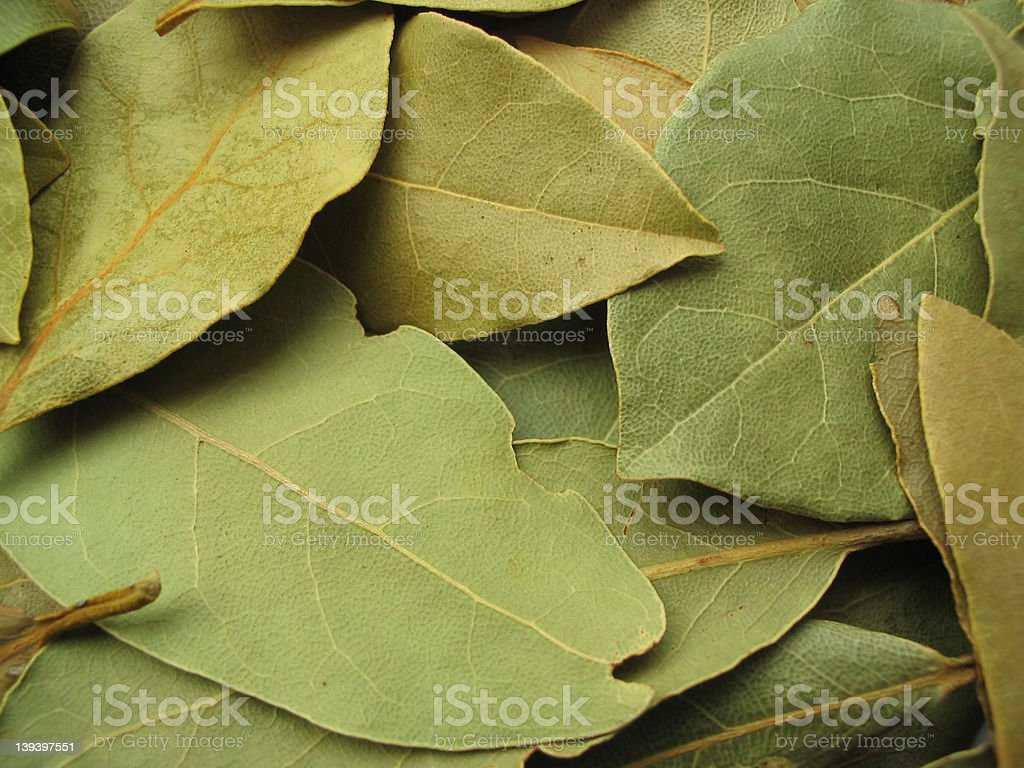 bay leaves close-up royalty-free stock photo