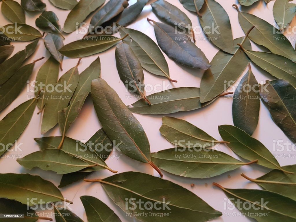Bay Leaves Collection royalty-free stock photo