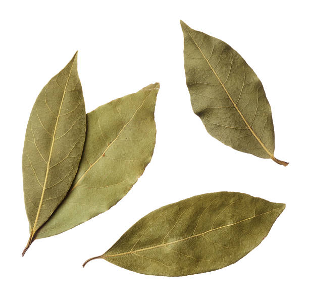 Bay leaves isolated on white background Bay leaves isolated on white background dried plant stock pictures, royalty-free photos & images