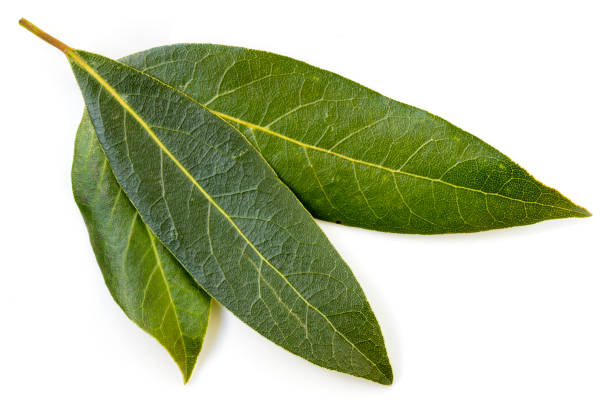 Bay Leaves isolated stock photo