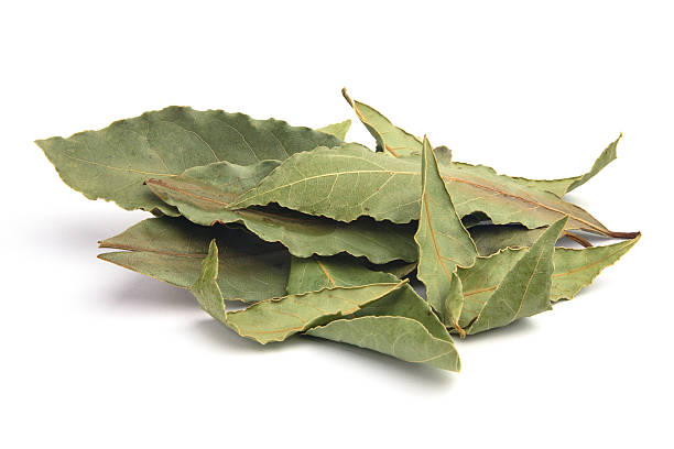 Bay leaves. stock photo