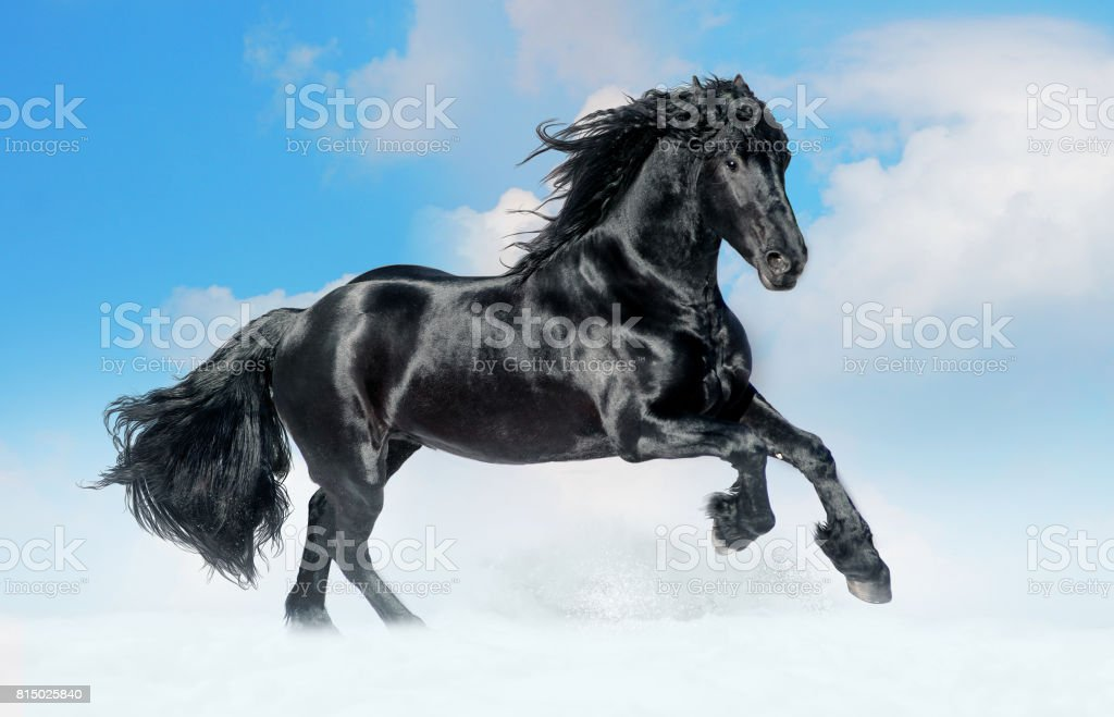 Bay Lusitano Horse In Winter Field Stock Photo Download Image Now Istock