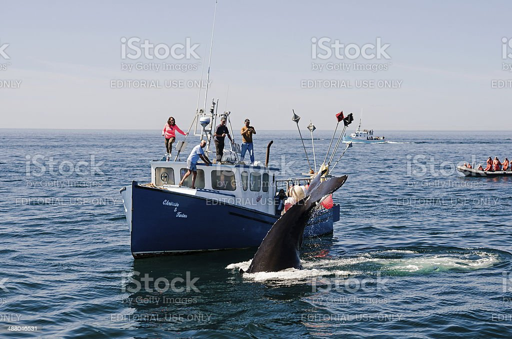 Bay of Fundy Whale Watching royalty-free stock photo