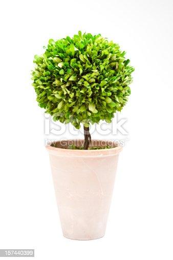 Decorative topiary in terra cotta pot.