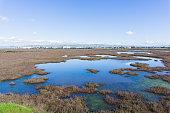 Baylands in Don Edwards wildlife refuge, Fremont, San Francisco bay area, California