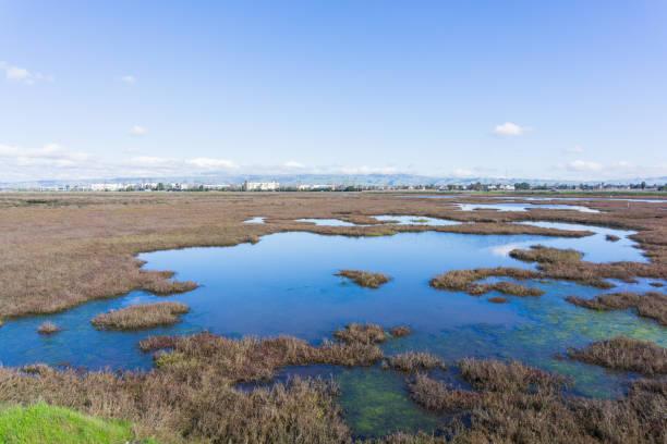 baylands in don edwards wildlife refuge, fremont, san francisco bay area, california - mokradło zdjęcia i obrazy z banku zdjęć