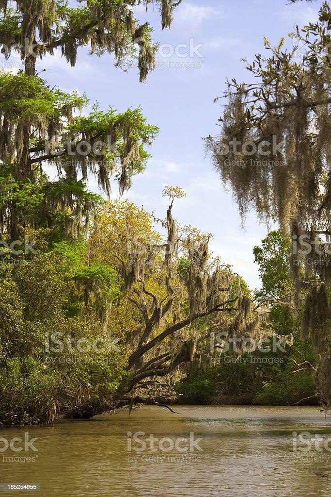 Bayou Beauty - New Orleans stock photo