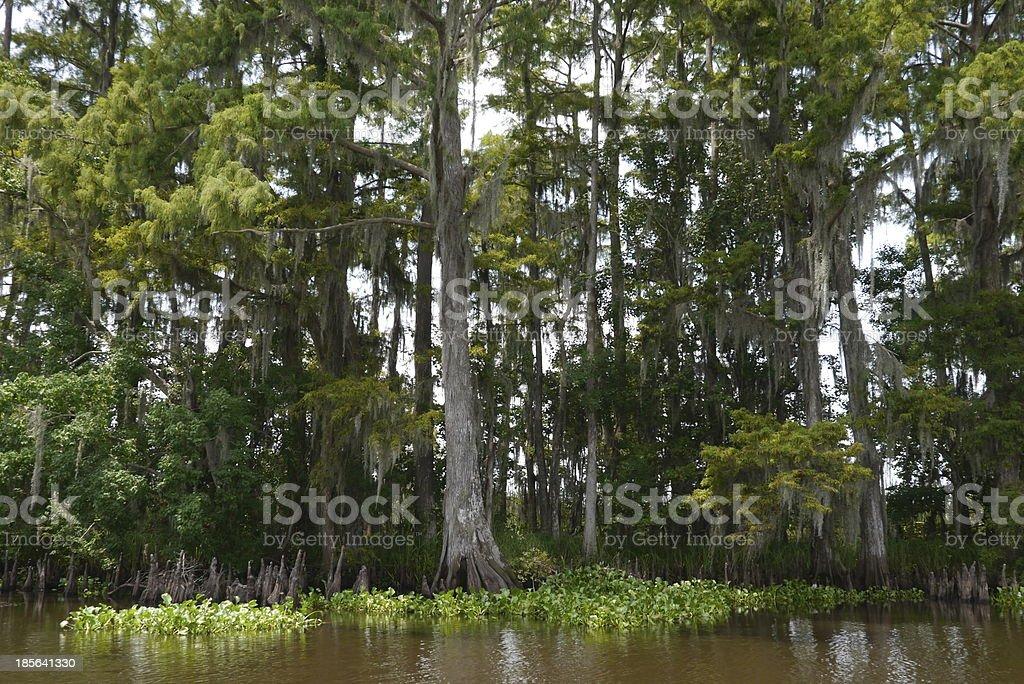 Bayou royalty-free stock photo