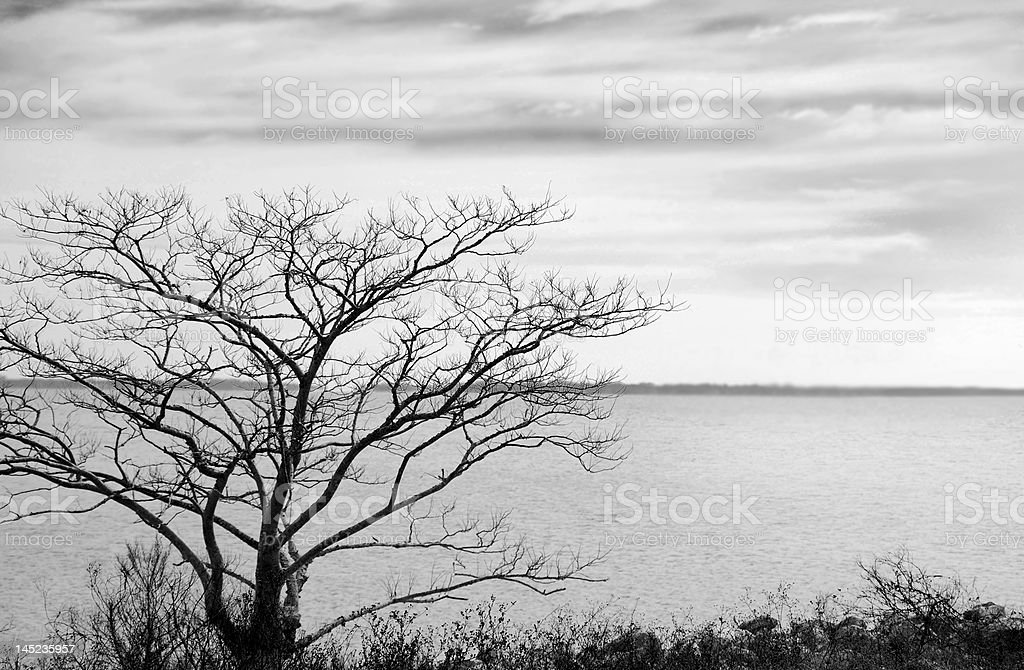 Bayside Tree royalty-free stock photo