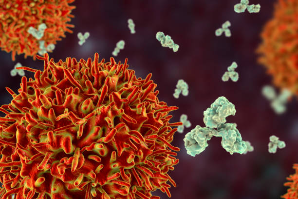 B-cell and antibodies stock photo