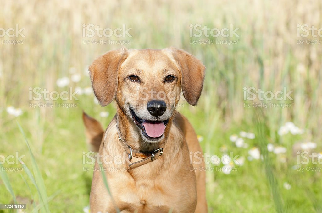 Be Happy royalty-free stock photo