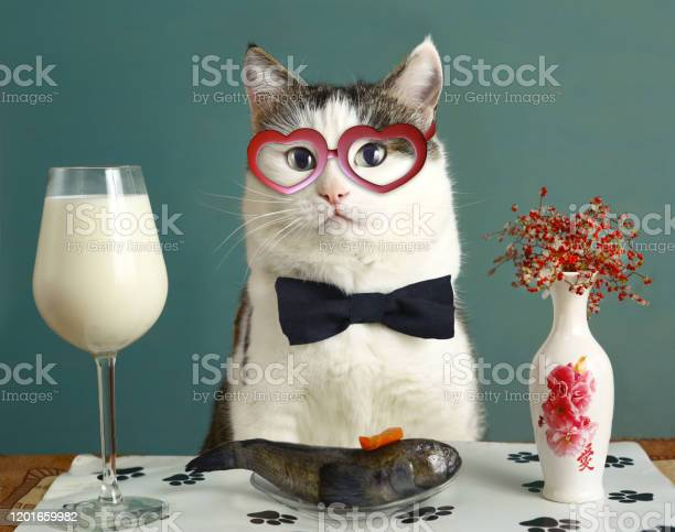 Be my valentine day card with funny cat in heart eye glasses milk and picture id1201659982?b=1&k=6&m=1201659982&s=612x612&h=quuczwm0 tlwpyl 6 v9y tcggvqfg0epedtkyh10fu=