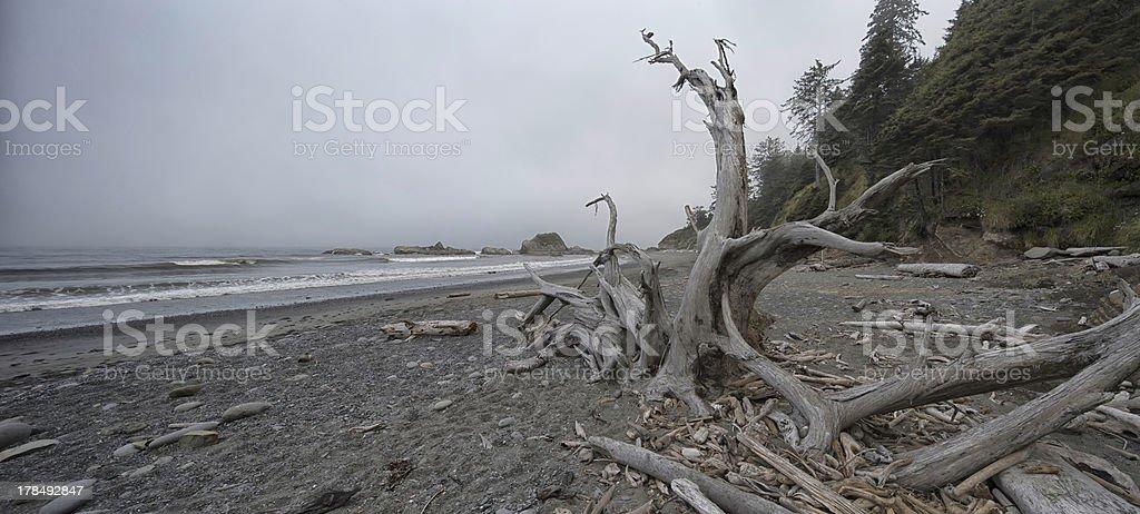Beach 4 Driftwood stock photo
