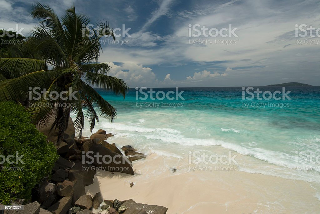 beach and coconut palm royalty-free stock photo