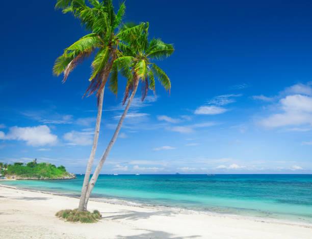 Strand und Kokosnuss-Plm-Baum, Langob Strand, Malapascua Island, Cebu – Foto