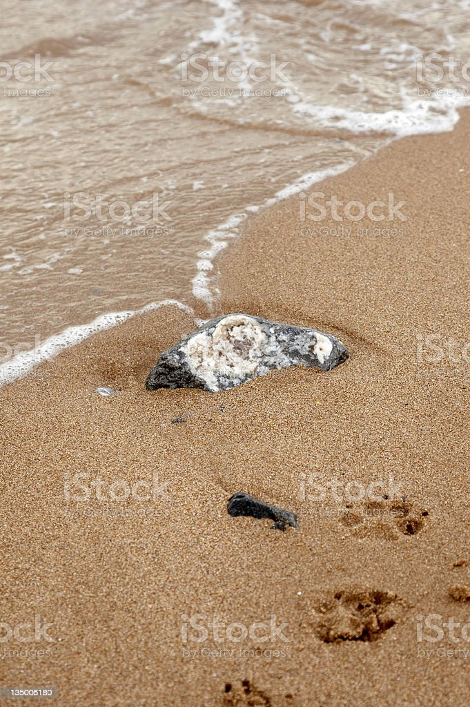 Beach and dog paw prints rock in sand stock photo