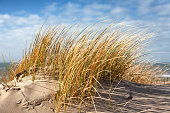 Beach and dunes with beachgrass in spring