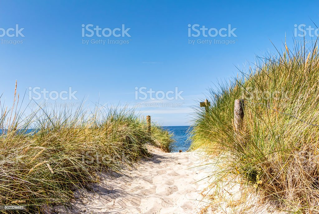 Beach and dunes with beachgrass in summer stock photo