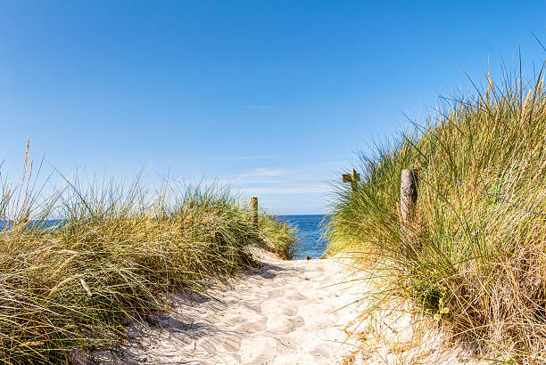 beach and dunes with beachgrass in summer - sand dune stock photos and pictures