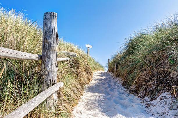 beach and dunes with beachgrass in summer - usedom stock-fotos und bilder