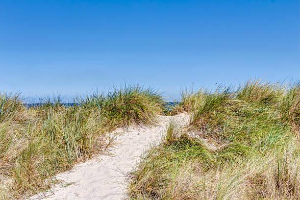 Beach and dunes with beachgrass – Foto