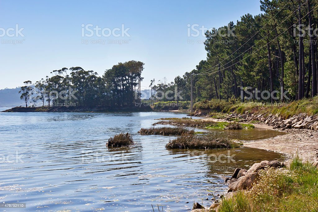 Beach and forest royalty-free stock photo