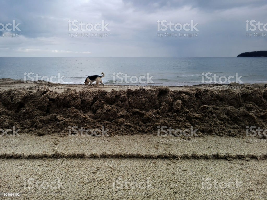 beach and one dog royalty-free stock photo