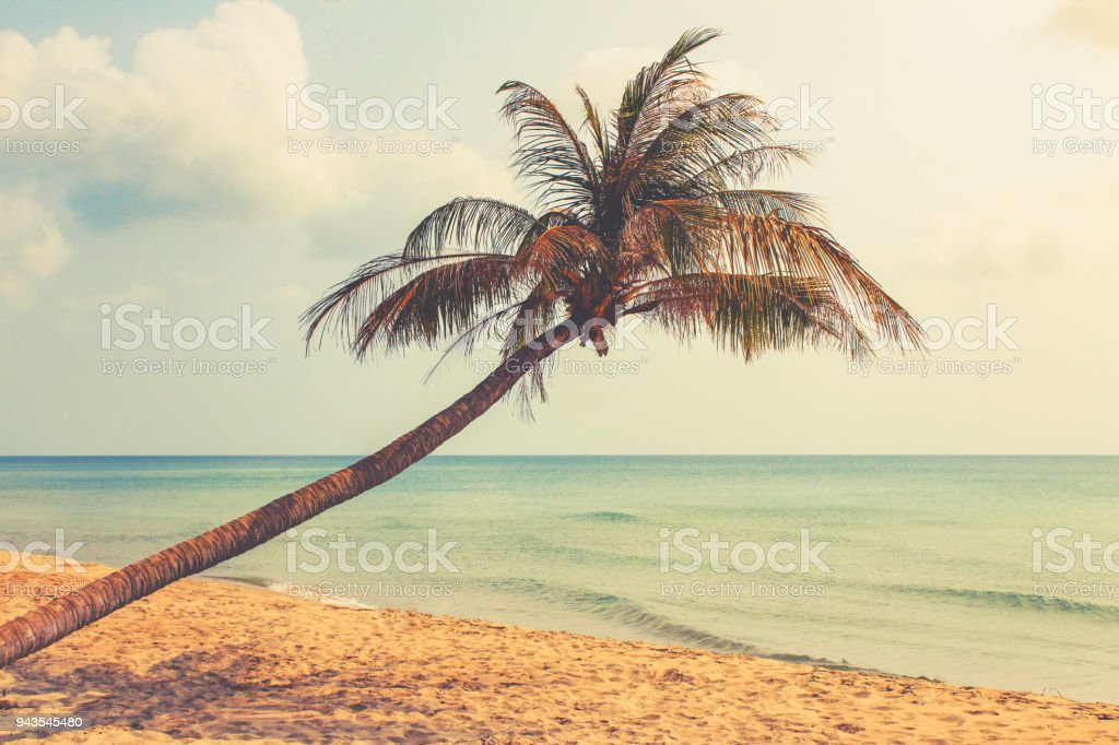 beach and  palm tree  with ocean background stock photo