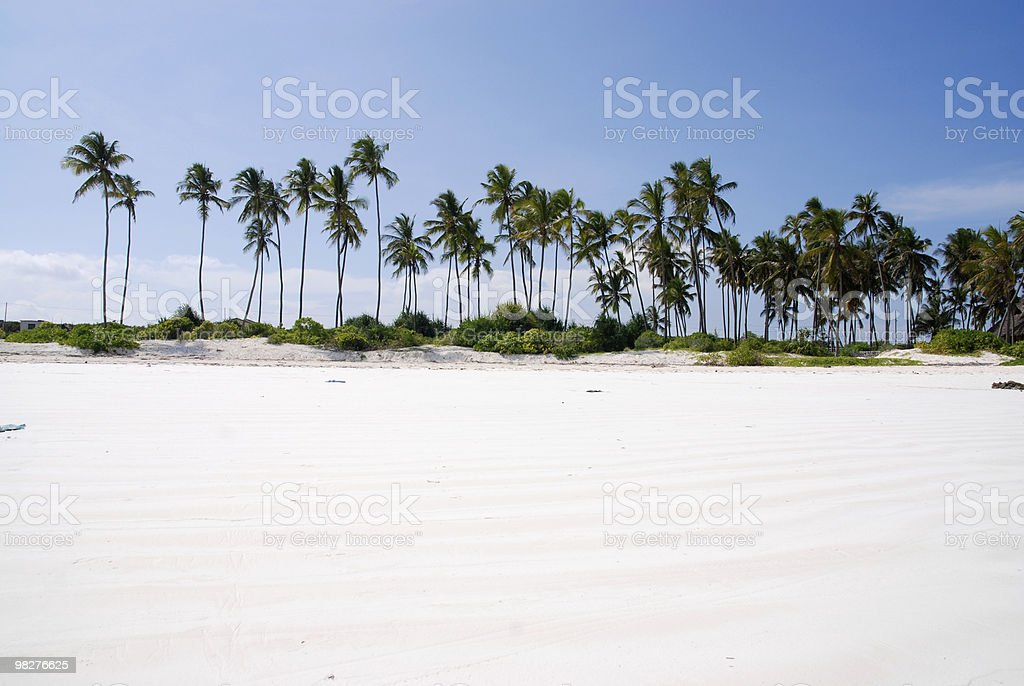 beach and palm trees royalty-free stock photo