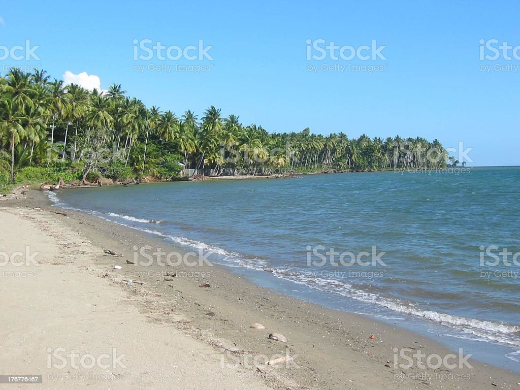 beach and palms 01 royalty-free stock photo