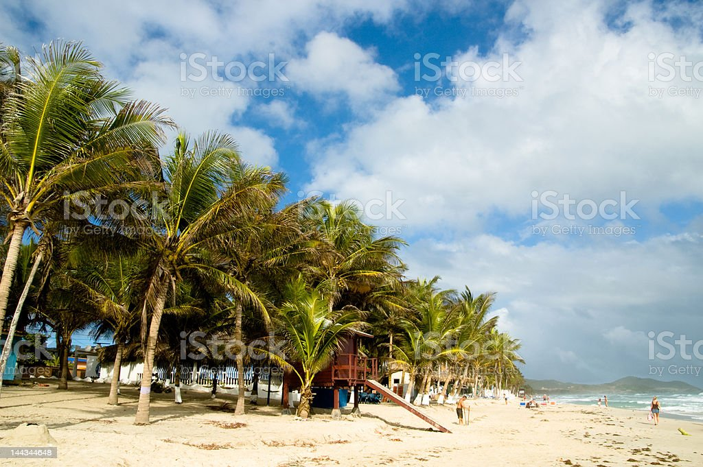 Beach and Palms royalty-free stock photo