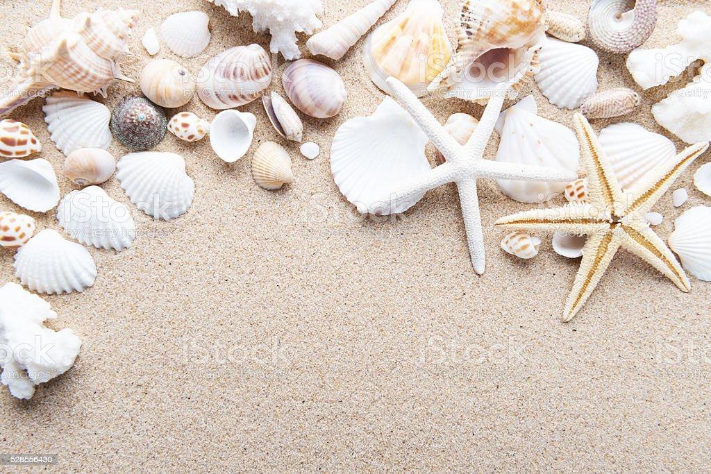 Beach and Sea life stock photo
