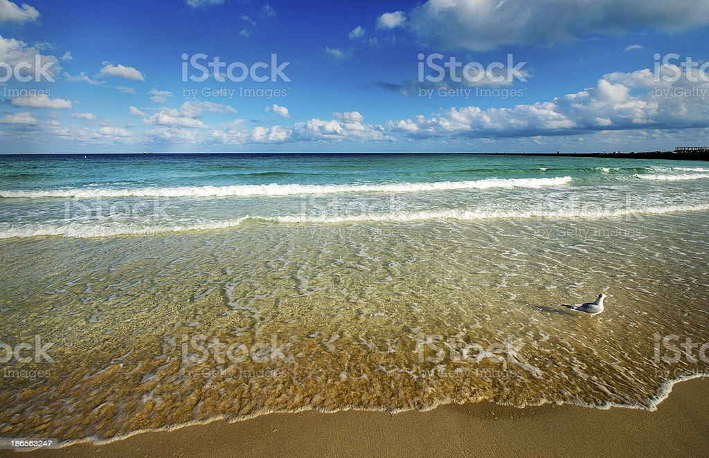 beach and seagull stock photo