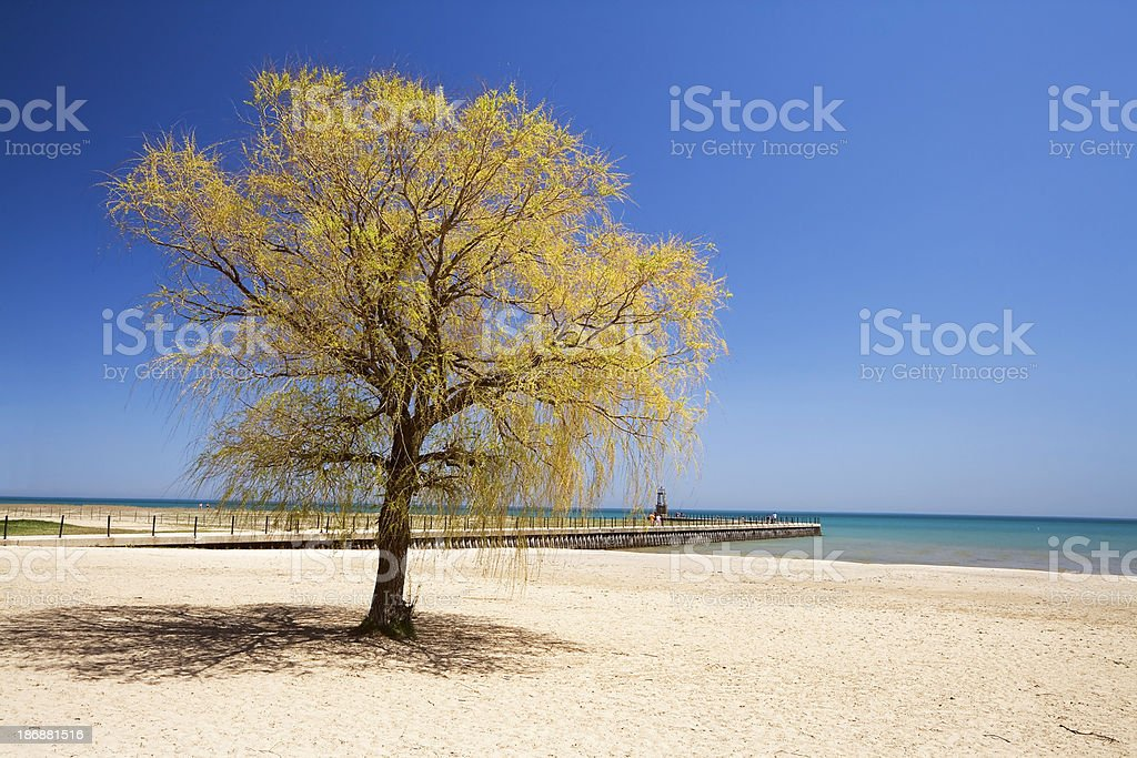 Beach and Tree in Rogers Park, Chicago royalty-free stock photo