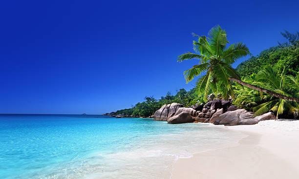 해변의 프레슬린섬, 세이셜 - 세이셸 뉴스 사진 이미지