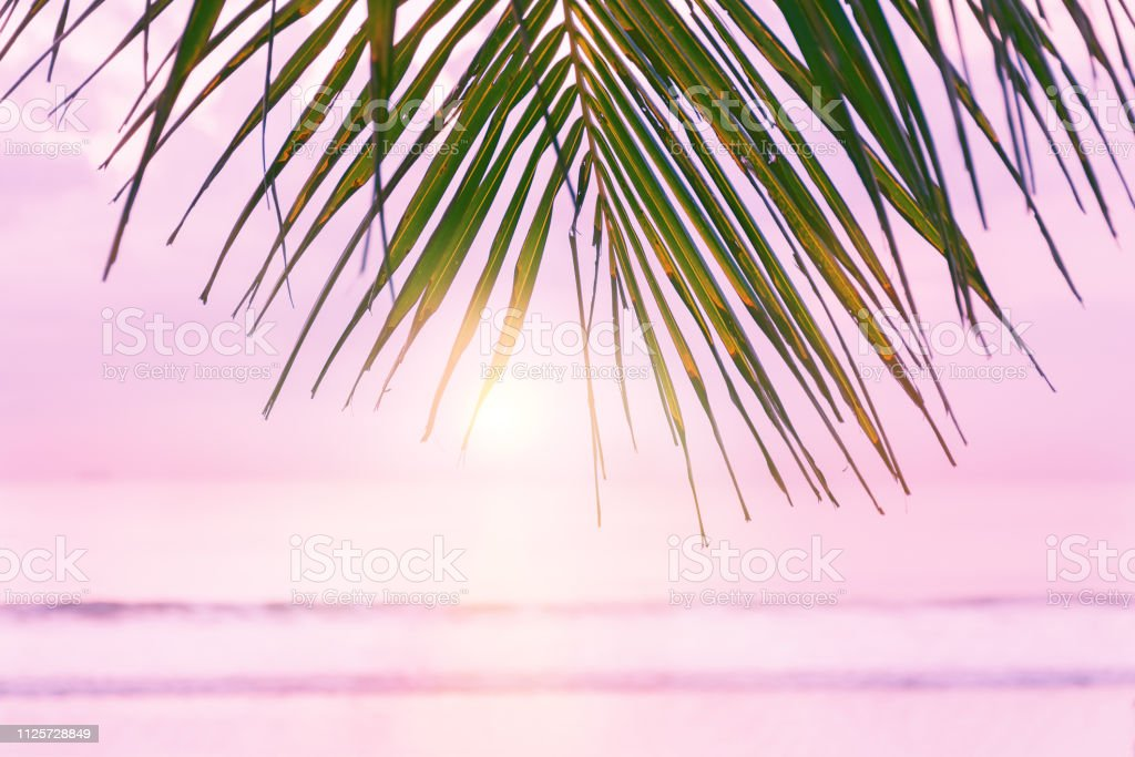 Beach background with palm tree. Tropical beach palm leafs. Pink...