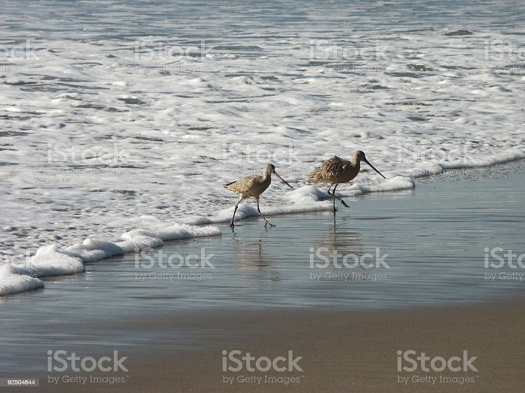 Beach Birds 1 royalty-free stock photo