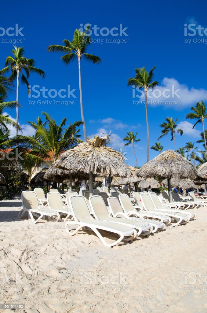 Beach chairs under palm royalty-free stock photo