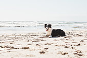 istock Beach days are better when you bring along a canine pal 1193697022