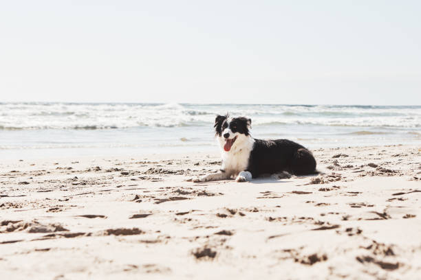 Beach days are better when you bring along a canine pal