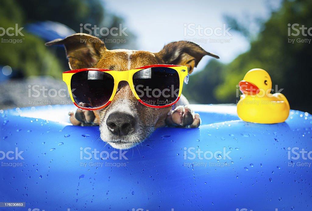dog on blue air mattress in water refreshing