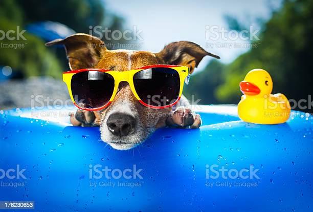 Beach dog picture id176230653?b=1&k=6&m=176230653&s=612x612&h=lck3ompblyqyma4erel dzr36q7zqi3lrsg2fdmppsu=